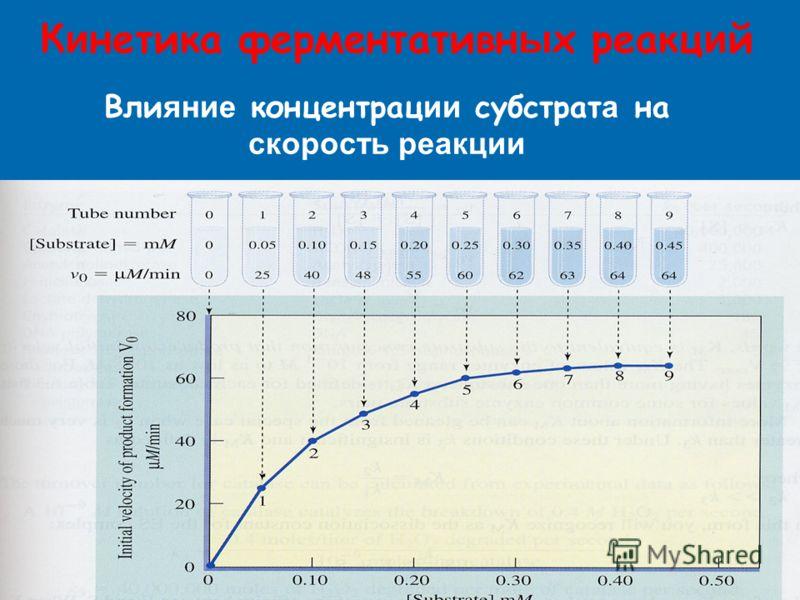 К и нетика ферментативн ы х реакц и й Вли яние концентрац ии субстрат а на скорость реакции