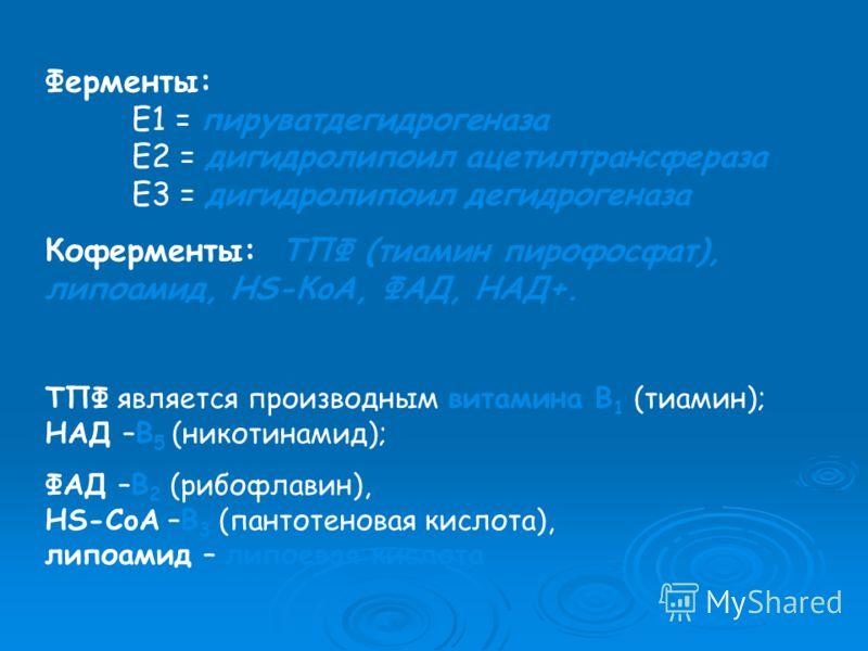 Ферменты: E1 = пируватдегидрогеназа E2 = дигидролипоил ацетилтрансфераза E3 = дигидролипоил дегидрогеназа Коферменты: ТПФ (тиамин пирофосфат), липоамид, HS-КoA, ФАД, НАД+. ТПФ является производным витамина B 1 (тиамин); НАД –B 5 (никотинамид); ФАД –B