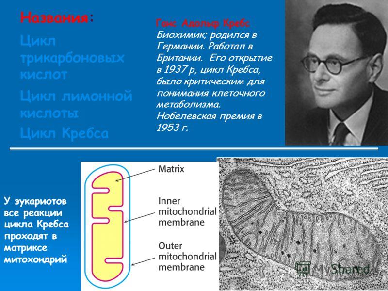 Названия: Цикл трикарбоновых кислот Цикл лимонной кислоты Цикл Кребса У эукариотов все реакции цикла Кребса проходят в матриксе митохондрий Ганс Адольф Кребс Биохимик; родился в Германии. Работал в Британии. Его открытие в 1937 р, цикл Кребса, было к