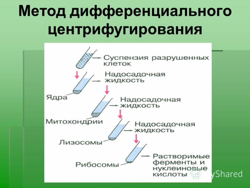 Метод дифференциального центрифугирования
