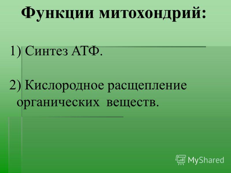 Функции митохондрий: 1) Синтез АТФ. 2) Кислородное расщепление органических веществ.