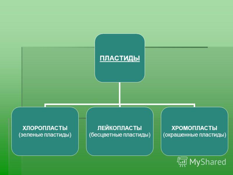 ПЛАСТИДЫ ХЛОРОПЛАСТЫ (зеленые пластиды) ЛЕЙКОПЛАСТЫ (бесцветные пластиды) ХРОМОПЛАСТЫ (окрашенные пластиды)