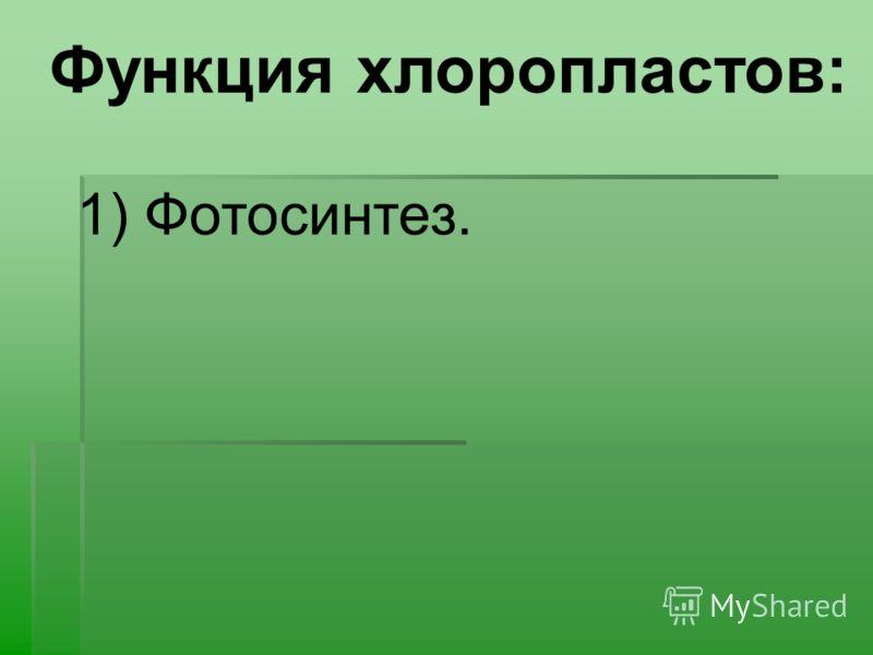 Функция хлоропластов: 1) Фотосинтез.
