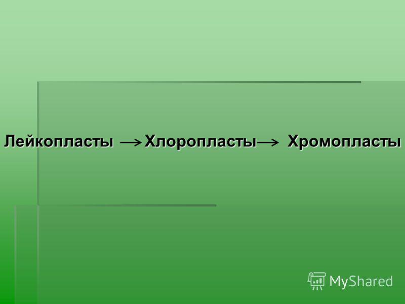 Лейкопласты Хлоропласты Хромопласты