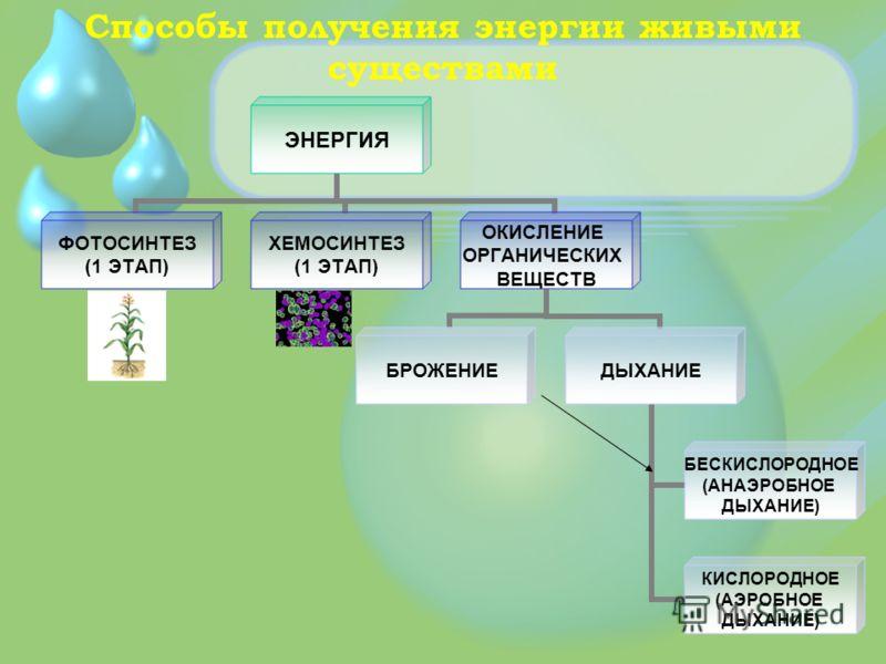 Способы получения энергии живыми существами ЭНЕРГИЯ ФОТОСИНТЕЗ (1 ЭТАП) ХЕМОСИНТЕЗ (1 ЭТАП) ОКИСЛЕНИЕ ОРГАНИЧЕСКИХ ВЕЩЕСТВ БРОЖЕНИЕДЫХАНИЕ БЕСКИСЛОРОДНОЕ (АНАЭРОБНОЕ ДЫХАНИЕ) КИСЛОРОДНОЕ (АЭРОБНОЕ ДЫХАНИЕ)