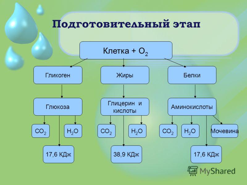 Подготовительный этап Клетка + О 2 ГликогенЖирыБелки Глюкоза Глицерин и кислоты Аминокислоты СО 2 Н2ОН2О Н2ОН2О Н2ОН2ОМочевина 17,6 КДж38,9 КДж17,6 КДж