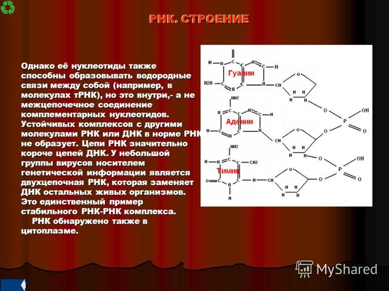 Однако её нуклеотиды также способны образовывать водородные связи между собой (например, в молекулах тРНК), но это внутри,- а не межцепочечное соединение комплементарных нуклеотидов. Устойчивых комплексов с другими молекулами РНК или ДНК в норме РНК