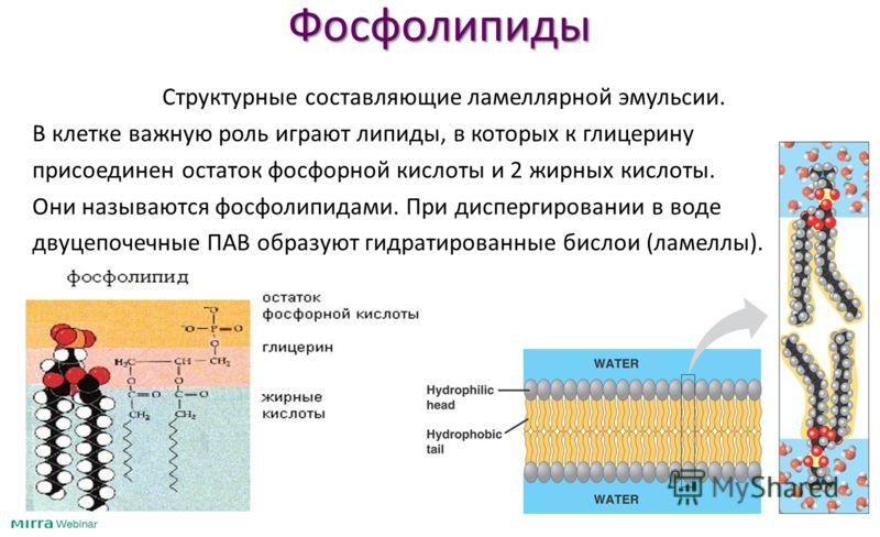 Фосфолипиды Cтруктурные составляющие ламеллярной эмульсии. В клетке важную роль играют липиды, в которых к глицерину присоединен остаток фосфорной кислоты и 2 жирных кислоты. Они называются фосфолипидами. При диспергировании в воде двуцепочечные ПАВ