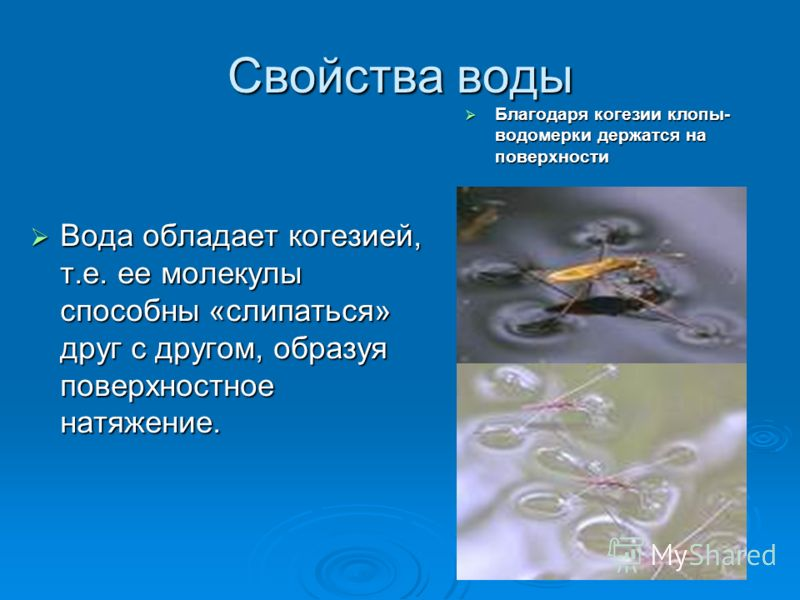 Свойства воды Вода обладает когезией, т.е. ее молекулы способны «слипаться» друг с другом, образуя поверхностное натяжение. Вода обладает когезией, т.е. ее молекулы способны «слипаться» друг с другом, образуя поверхностное натяжение. Благодаря когези