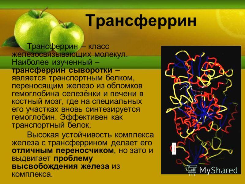 Трансферрин Трансферрин – класс железосвязывающих молекул. Наиболее изученный – трансферрин сыворотки – является транспортным белком, переносящим железо из обломков гемоглобина селезёнки и печени в костный мозг, где на специальных его участках вновь