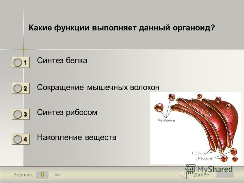 5 Задание Какие функции выполняет данный органоид? Синтез белка Сокращение мышечных волокон Синтез рибосом Накопление веществ Далее 1 бал. 1111 0 2222 0 3333 0 4444 0