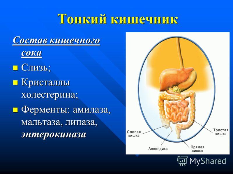 Тонкий кишечник Состав кишечного сока Слизь; Слизь; Кристаллы холестерина; Кристаллы холестерина; Ферменты: амилаза, мальтаза, липаза, энтерокиназа Ферменты: амилаза, мальтаза, липаза, энтерокиназа