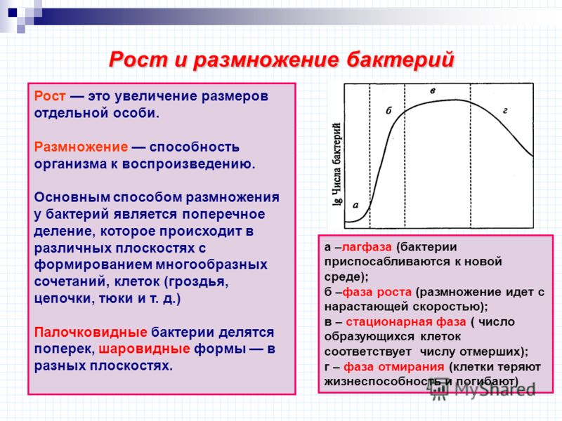 Рост и размножение бактерий а