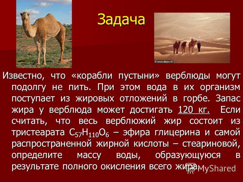 Задача Известно, что «корабли пустыни» верблюды могут подолгу не пить. При этом вода в их организм поступает из жировых отложений в горбе. Запас жира у верблюда может достигать 120 кг. Если считать, что весь верблюжий жир состоит из тристеарата С 57