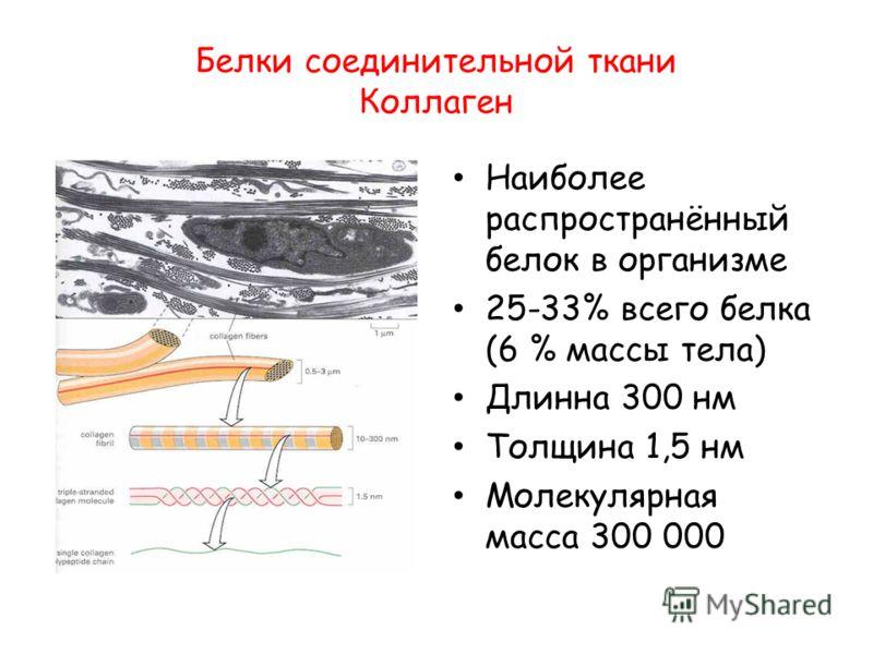 Белки соединительной ткани Коллаген Наиболее распространённый белок в организме 25-33% всего белка (6 % массы тела) Длинна 300 нм Толщина 1,5 нм Молекулярная масса 300 000
