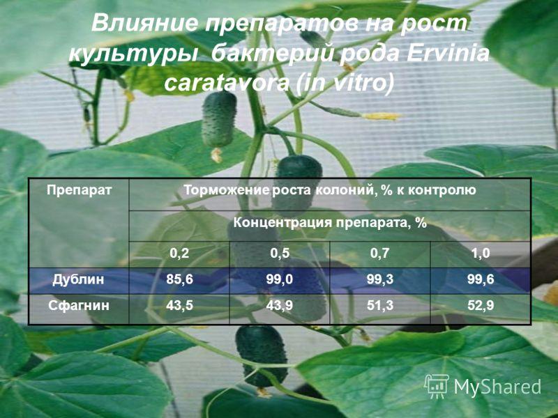 Влияние препаратов на рост культуры бактерий рода Ervinia caratavora (in vitro) ПрепаратТорможение роста колоний, % к контролю Концентрация препарата, % 0,20,50,71,0 Дублин85,699,099,399,6 Сфагнин43,543,951,352,9