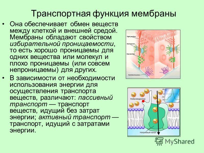 Транспортная функция мембраны Она обеспечивает обмен веществ между клеткой и внешней средой. Мембраны обладают свойством избирательной проницаемости, то есть хорошо проницаемы для одних вещества или молекул и плохо проницаемы (или совсем непроницаемы