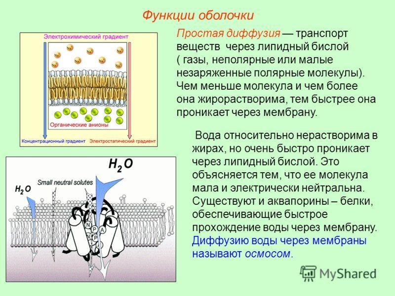 Функции оболочки Простая диффузия транспорт веществ через липидный бислой ( газы, неполярные или малые незаряженные полярные молекулы). Чем меньше молекула и чем более она жирорастворима, тем быстрее она проникает через мембрану. Вода относительно не