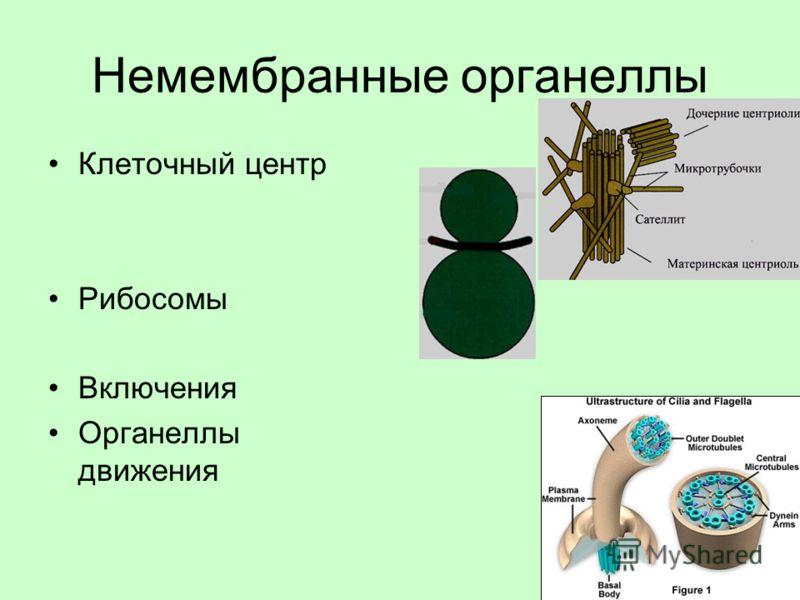 Немембранные органеллы Клеточный центр Рибосомы Включения Органеллы движения