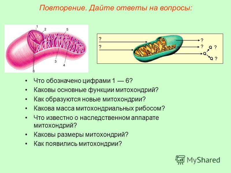 Что обозначено цифрами 1 6? Каковы основные функции митохондрий? Как образуются новые митохондрии? Какова масса митохондриальных рибосом? Что известно о наследственном аппарате митохондрий? Каковы размеры митохондрий? Как появились митохондрии? Повто