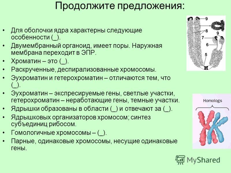 Продолжите предложения: Для оболочки ядра характерны следующие особенности (_). Двумембранный органоид, имеет поры. Наружная мембрана переходит в ЭПР. Хроматин – это (_). Раскрученные, деспирализованные хромосомы. Эухроматин и гетерохроматин – отлича