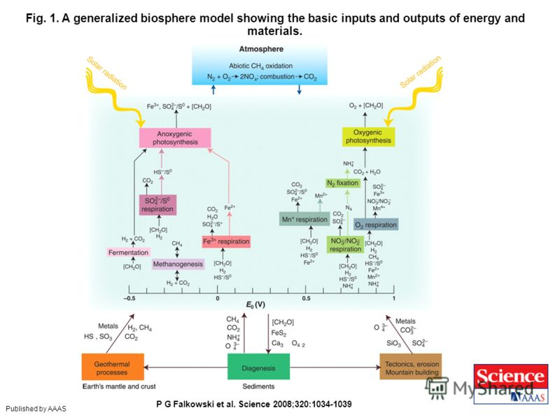 Fig. 1. A generalized biosphere model showing the basic inputs and outputs of energy and materials. P G Falkowski et al. Science 2008;320:1034-1039 Published by AAAS