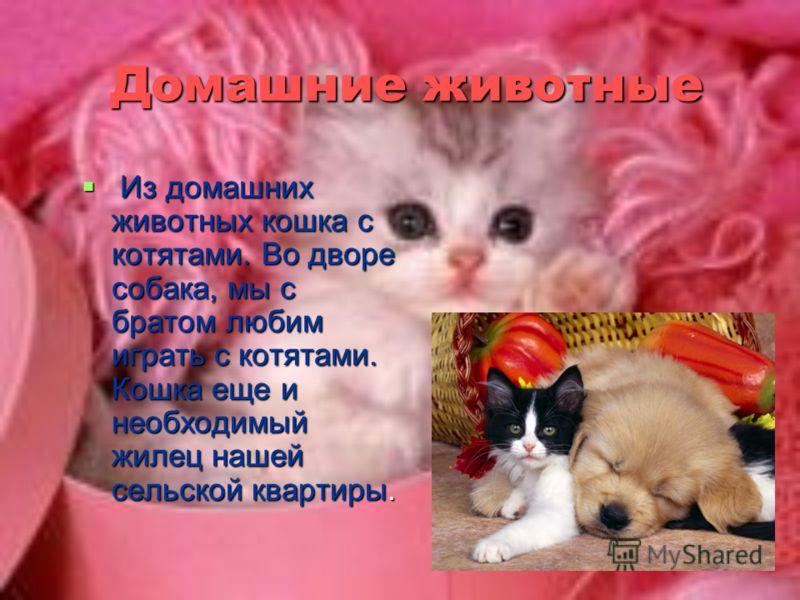 Домашние животные Из домашних животных кошка с котятами. Во дворе собака, мы с братом любим играть с котятами. Кошка еще и необходимый жилец нашей сельской квартиры. Из домашних животных кошка с котятами. Во дворе собака, мы с братом любим играть с к