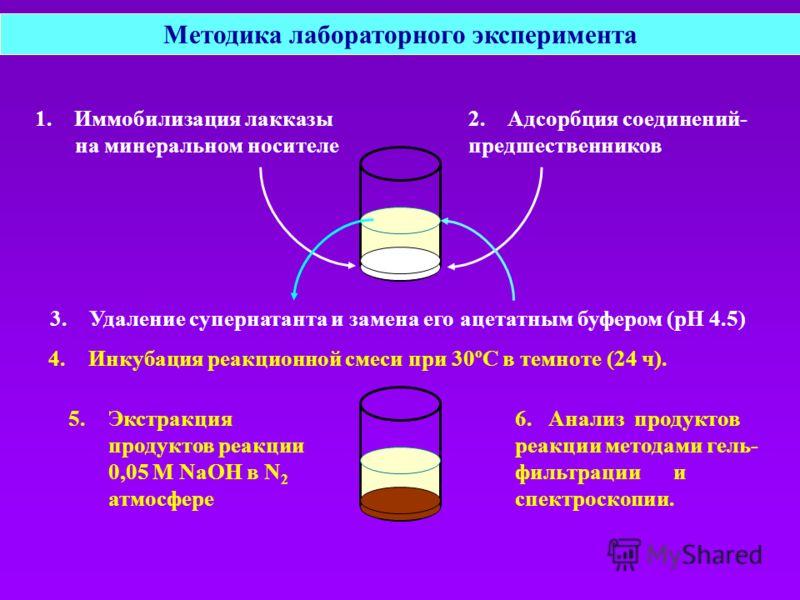 Методика лабораторного эксперимента 1. Иммобилизация лакказы на минеральном носителе 3. Удаление супернатанта и замена его ацетатным буфером (рН 4.5) 4.Инкубация реакционной смеси при 30ºС в темноте (24 ч). 6. Анализ продуктов реакции методами гель-