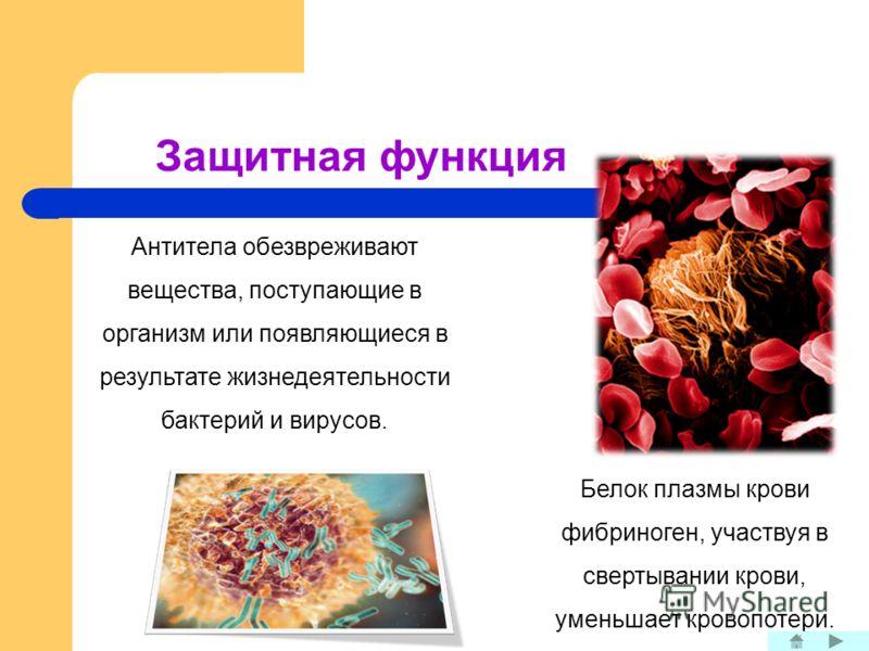 Защитная функция Антитела обезвреживают вещества, поступающие в организм или появляющиеся в результате жизнедеятельности бактерий и вирусов. Белок плазмы крови фибриноген, участвуя в свертывании крови, уменьшает кровопотери.