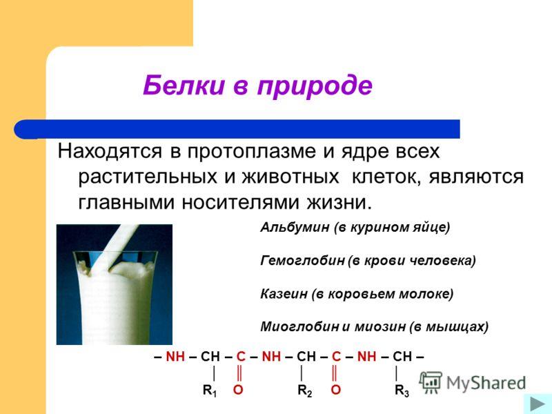 Белки в природе Находятся в протоплазме и ядре всех растительных и животных клеток, являются главными носителями жизни. Альбумин (в курином яйце) Гемоглобин (в крови человека) Казеин (в коровьем молоке) Миоглобин и миозин (в мышцах) – NH – CH – C – N