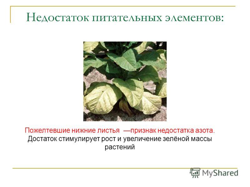 Недостаток питательных элементов: Пожелтевшие нижние листья признак недостатка азота. Достаток стимулирует рост и увеличение зелёной массы растений