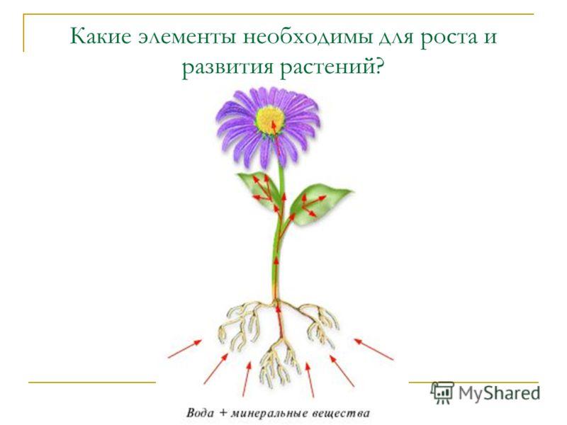 Какие элементы необходимы для роста и развития растений?