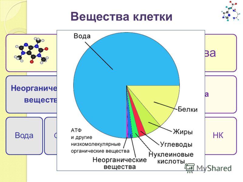 Вещества клетки Химические вещества Неорганические вещества ВодаСоли Органические вещества УглеводыЛипидыБелки НК