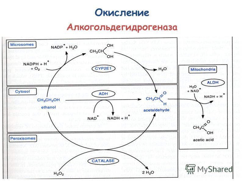 Окисление Алкогольдегидрогеназа
