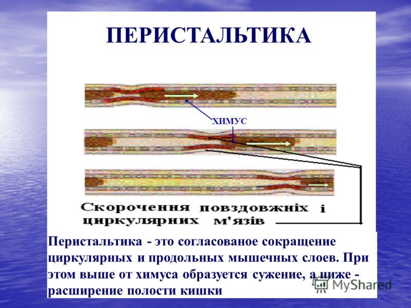 ХИМУС Перистальтика - это согласованое сокращение циркулярных и продольных мышечных слоев. При этом выше от химуса образуется сужение, а ниже - расширение полости кишки ПЕРИСТАЛЬТИКА