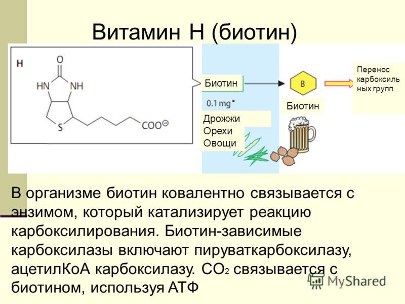 Витамин H (биотин) В организме биотин ковалентно связывается с энзимом, который катализирует реакцию карбоксилирования. Биотин-зависимые карбоксилазы включают пируваткарбоксилазу, ацетилКоА карбоксилазу. CO 2 связывается с биотином, используя ATФ Био