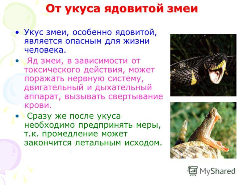 От укуса ядовитой змеи Укус змеи, особенно ядовитой, является опасным для жизни человека. Яд змеи, в зависимости от токсического действия, может поражать нервную систему, двигательный и дыхательный аппарат, вызывать свертывание крови. Сразу же после
