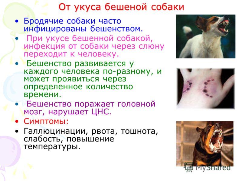 От укуса бешеной собаки Бродячие собаки часто инфицированы бешенством. При укусе бешенной собакой, инфекция от собаки через слюну переходит к человеку. Бешенство развивается у каждого человека по-разному, и может проявиться через определенное количес