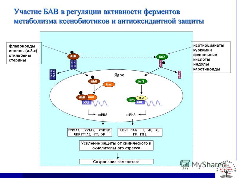 Участие БАВ в регуляции активности ферментов метаболизма ксенобиотиков и антиоксидантной защиты флавоноиды индолы (и-3-к) стильбены стерины изотиоцианаты куркумин фенольные кислоты индолы каротиноиды