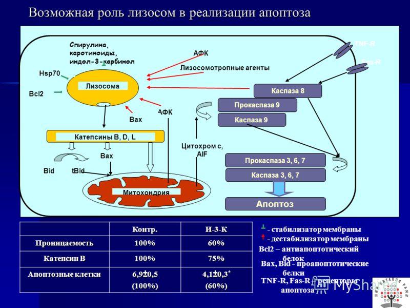Fas-R Bcl2 Спирулина, каротиноиды, индол-3-карбинол Лизосомотропные агенты Цитохром с, AIF TNF-R Катепсины B, D, L Митохондрия BidtBid Bax АФК Каспаза 8 Прокаспаза 9 Каспаза 9 Прокаспаза 3, 6, 7 Каспаза 3, 6, 7 Апоптоз АФК Bax Hsp70 Лизосома Катепсин