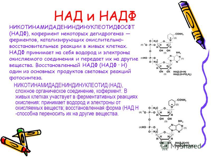 РР (никотиновая кислота) НИКОТИНОВАЯ КИСЛОТА, C 6 H 5 NO 2, растворимый витамин группы В, производное пиридина. Как составная часть коферментов НАД и НАДФ участвует во многих окислительных реакциях в живых клетках. Нормализует секреторную и моторную