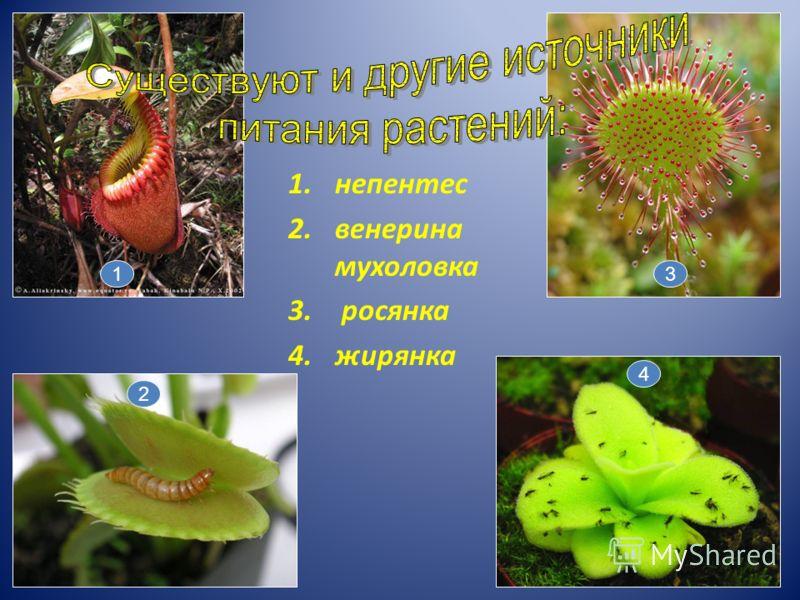 1.непентес 2.венерина мухоловка 3. росянка 4.жирянка 2 1 4 3