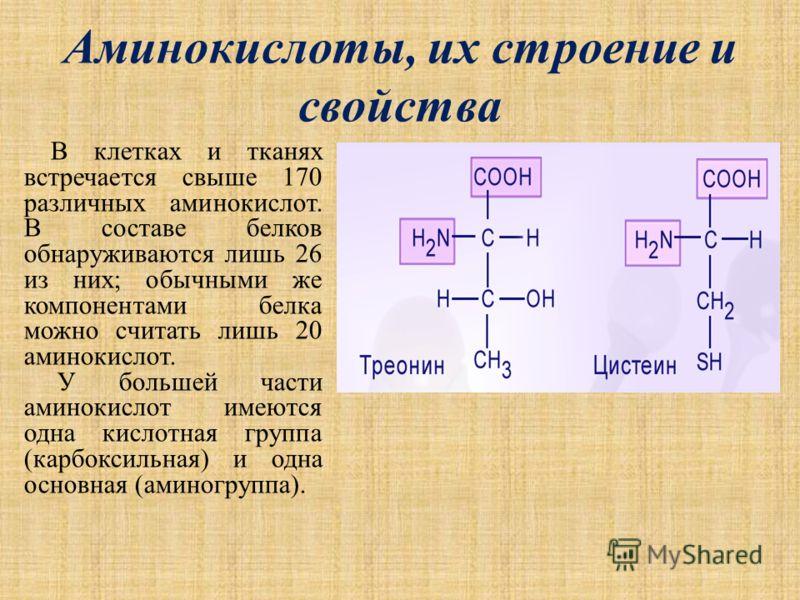 Аминокислоты, их строение и свойства В клетках и тканях встречается свыше 170 различных аминокислот. В составе белков обнаруживаются лишь 26 из них; обычными же компонентами белка можно считать лишь 20 аминокислот. У большей части аминокислот имеются