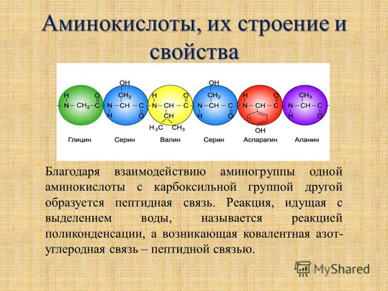 Аминокислоты, их строение и