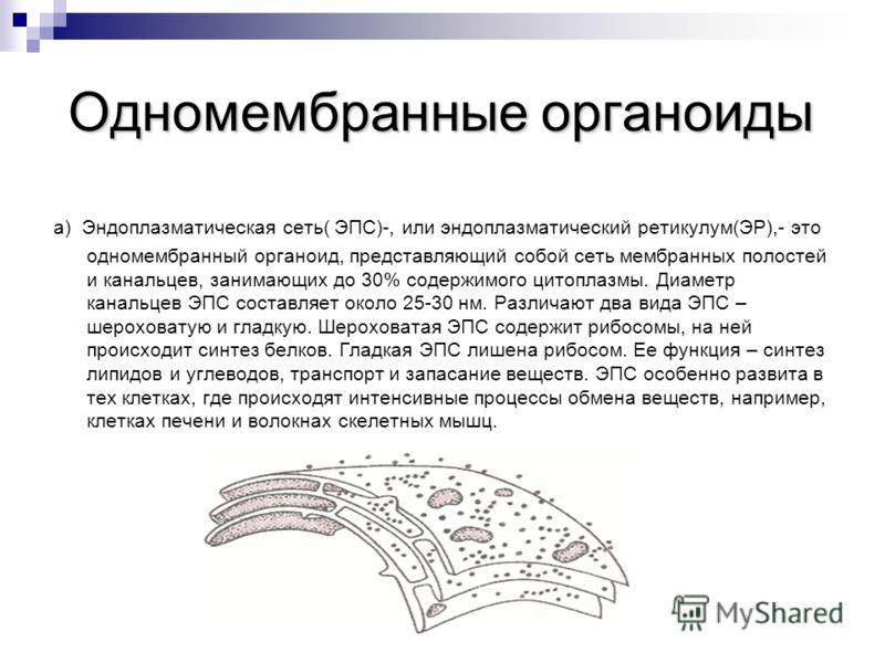 Одномембранные органоиды a) Эндоплазматическая сеть( ЭПС)-, или эндоплазматический ретикулум(ЭР),- это одномембранный органоид, представляющий собой сеть мембранных полостей и канальцев, занимающих до 30% содержимого цитоплазмы. Диаметр канальцев ЭПС