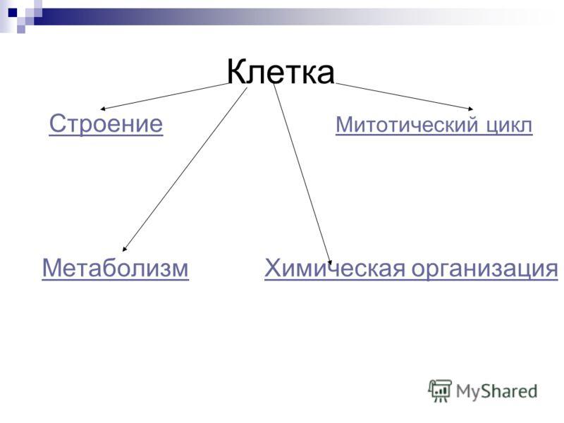 Строение Митотический циклСтроение Митотический цикл Метаболизм Химическая организацияМетаболизмХимическая организация