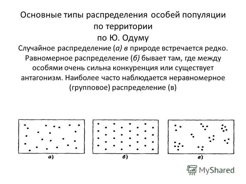 Основные типы распределения особей популяции по территории по Ю. Одуму Случайное распределение (а) в природе встречается редко. Равномерное распределение (б) бывает там, где между особями очень сильна конкуренция или существует антагонизм. Наиболее ч