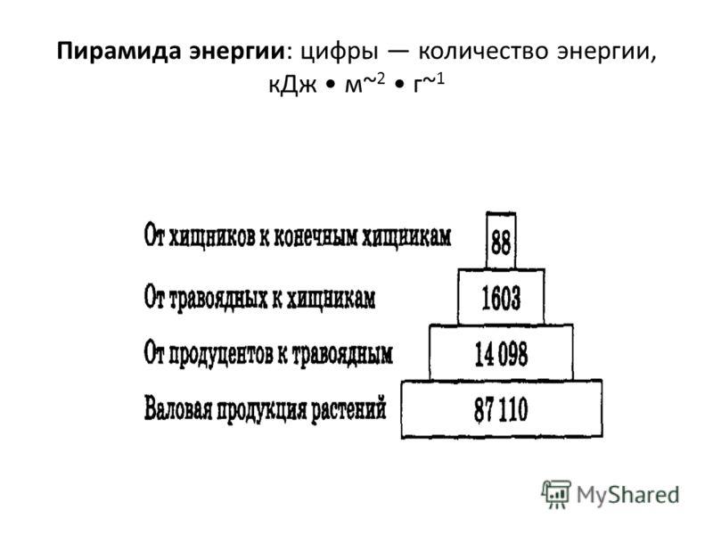 Пирамида энергии: цифры количество энергии, кДж м~ 2 г~ 1