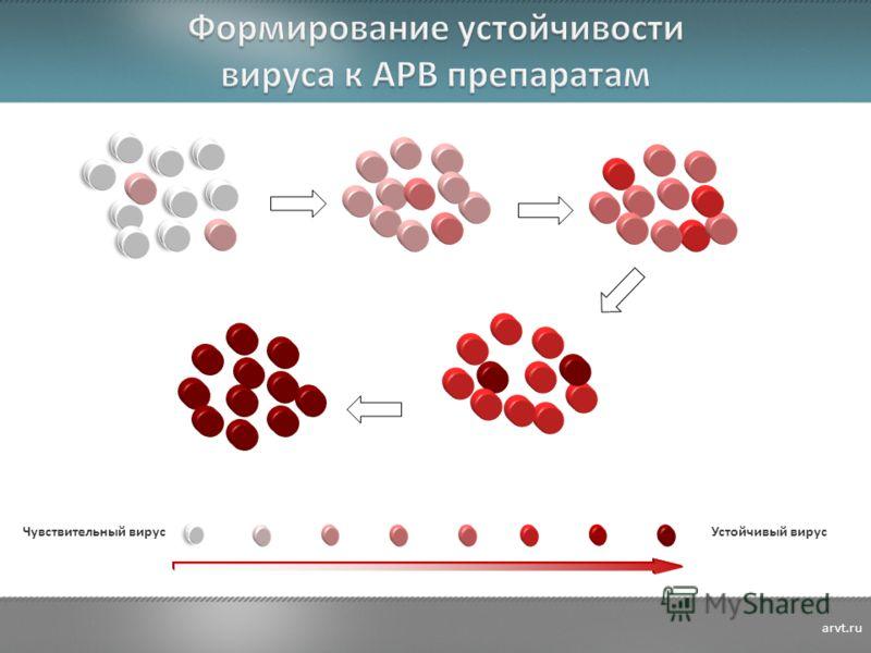 Устойчивый вирус Чувствительный вирус arvt.ru