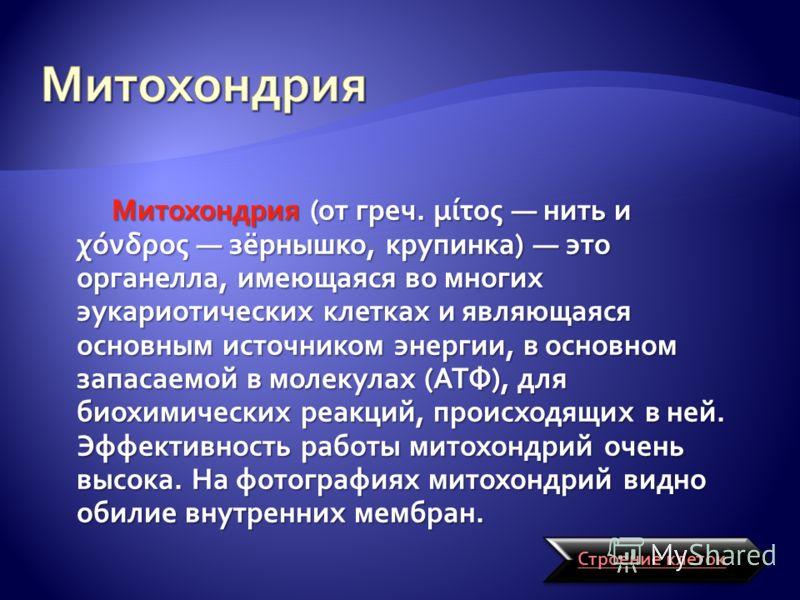 Митохондрия (от греч. μίτος нить и χόνδρος зёрнышко, крупинка) это органелла, имеющаяся во многих эукариотических клетках и являющаяся основным источником энергии, в основном запасаемой в молекулах (АТФ), для биохимических реакций, происходящих в ней